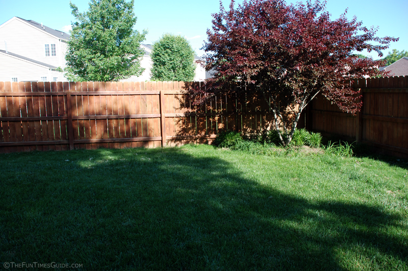 Backyard Turf Grass : backyardgrassgrowth12daysjpg