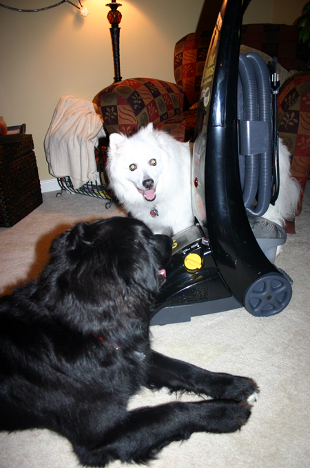 Bissell pro-heat is a must if you have pets... especially two