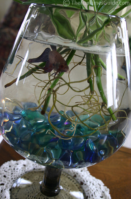 The gallery for paul bettany shirtless legion for Fish bowl with plant on top