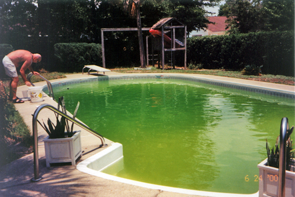 green pool Salt Water Swimming Pools