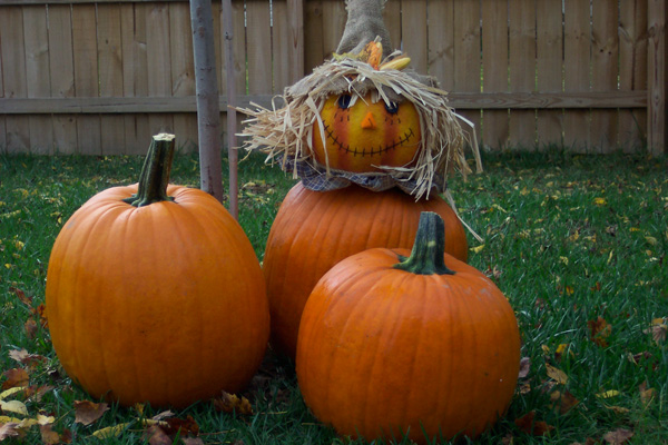 Pumpkin carving tips how to use templates