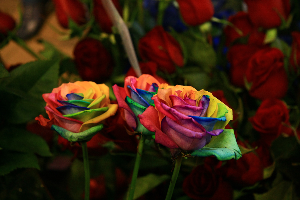 Rainbow roses are extra special flowers for the extra for Where to find rainbow roses