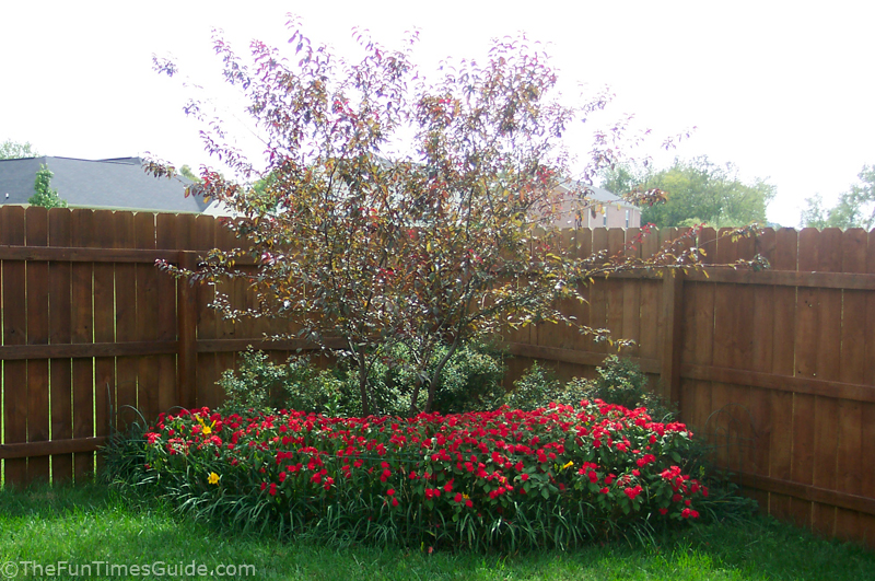 Featured Pest: Japanese Beetles - Garden Makeover Company |Japanese Maple Red Beetle