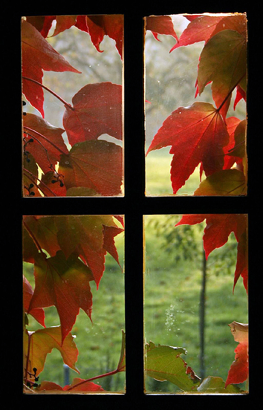 4 diy autumn home decor craft ideas using leaves fun for Autumn window decoration