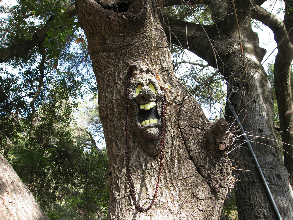 Photos All The Best Tree Faces Amp Talking Trees For