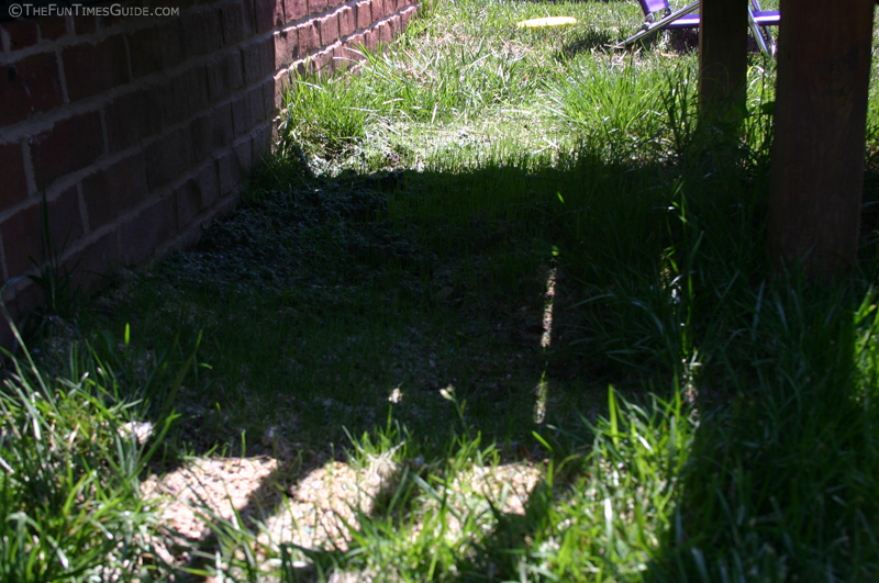 Scotts PatchMaster Lawn Repair Mix - Tall Fescue Mix