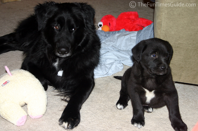 Puppy Update: Tenor Is Black... And A Little Blue | The ...