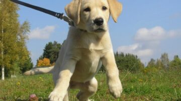 The Best Dog Training Collars And Dog Training Leads For Your New Puppy