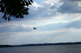 A bird flying over water.