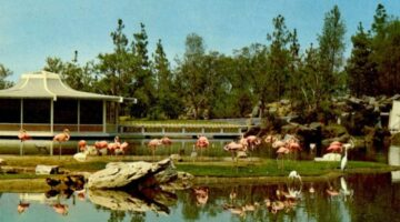 Abandoned California Theme Parks: A Tale Of 2 Busch Gardens In Los Angeles + 5 More Abandoned Theme Parks in California