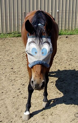horse-with-blinkers-on.jpg