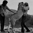 VIDEO: Wild African Lion Reunited With The Two Men Who Raised It As A Cub