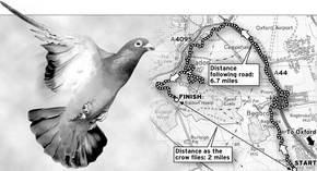 As the crow flies map... Proof that pigeons follow major roads and landmarks.